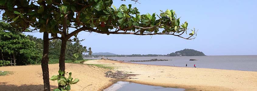 La Guyane-93, un territoire d'outre-mer qui offre de sérieux atouts pour investir