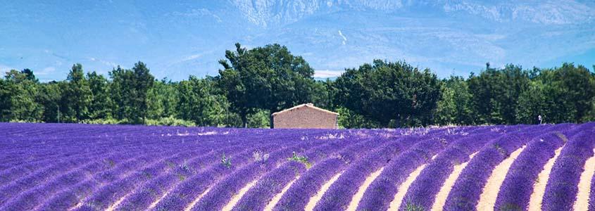 Acheter son logement neuf en région Provence-Alpes-Côte d'Azur
