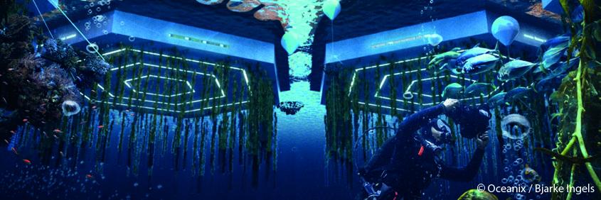Des+fermes+aquatiques+pour+nourrir+les+habitants+d'Oceanix+City