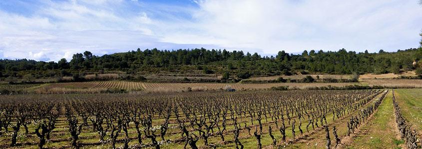 Découvrez le département de l'Aude, une terre viticole idéale pour investir dans la pierre.